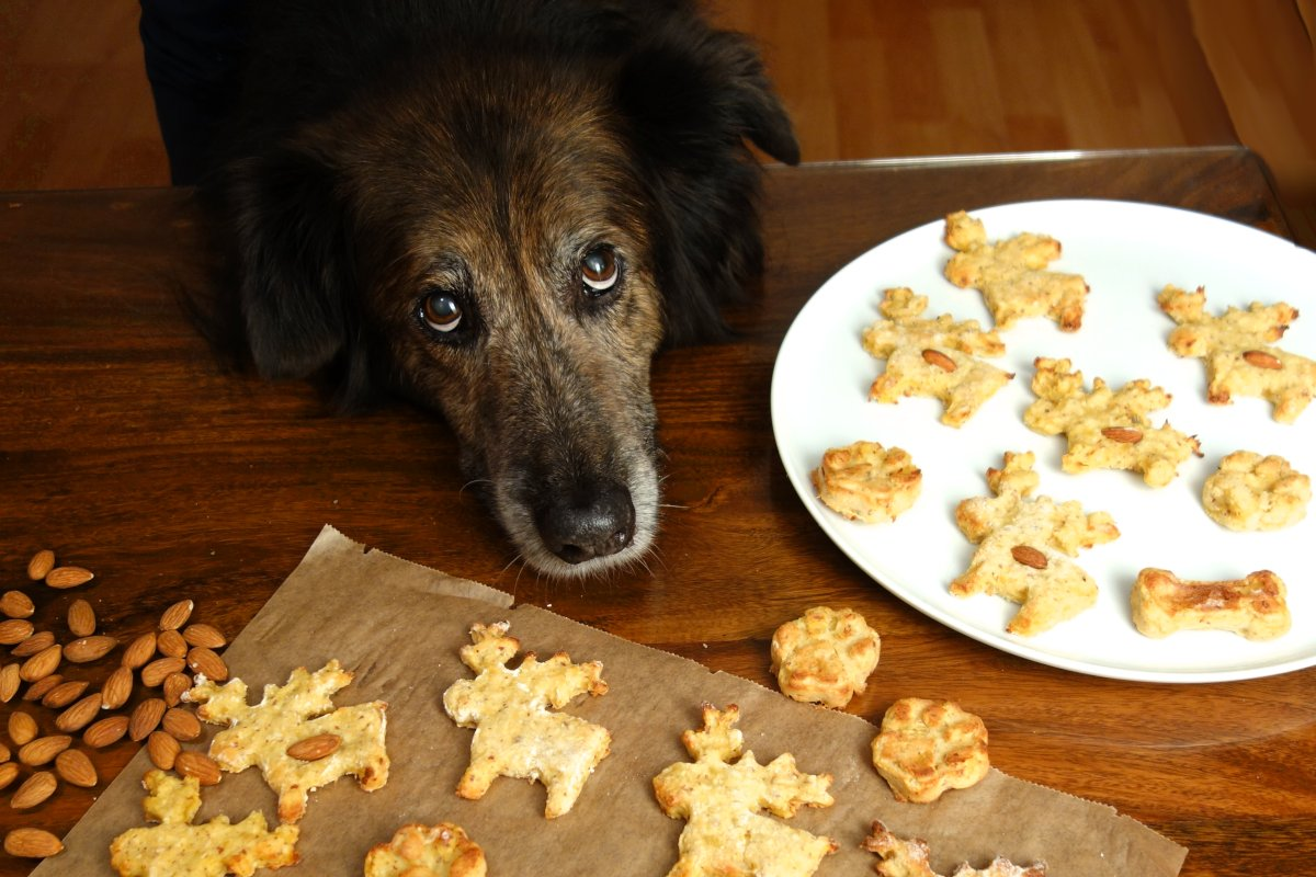 Christmas Cookies for Dogs – DIY recipe