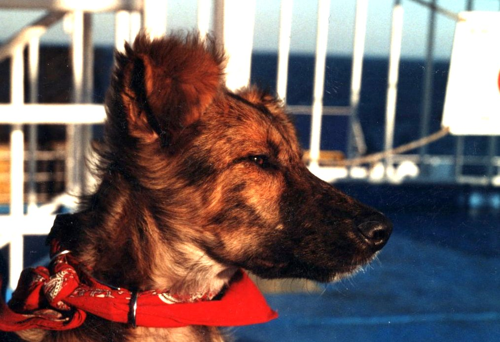 Filos profile – a street dog from Greece